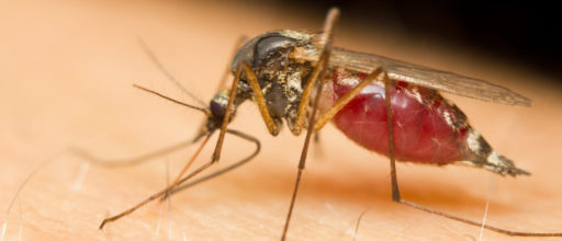 Data and analytics in front line in battle against malaria